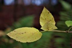 Желтоватые листья в лесе стоковая фотография rf