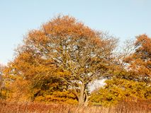 Желтое дерево осени выходит хобот ветвей текстуры предпосылки Стоковое фото RF