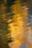 Желтое отражение дерева березы в воде стоковые фотографии rf