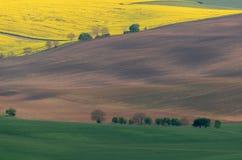 Желтое поле рапса с зеленым полем и деревья на южном Moravi Стоковое Изображение RF