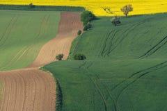 Желтое поле рапса с зеленым полем и деревья на южном Moravi Стоковое Фото
