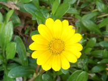 Желтое счастье стоковое изображение rf