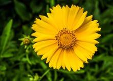 желтое фото крупного плана цветка, который нужно припарковать стоковое изображение