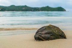 Желтое haad yao пляжа кокоса стоковые фотографии rf