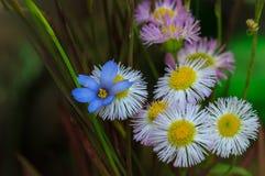 Желтые голубое и розовый Стоковая Фотография