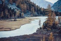 Желтые деревья и трава на банках реки горы стоковая фотография