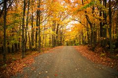 Желтые деревья над сельской дорогой стоковая фотография rf