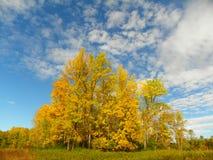 Желтые деревья приходят к центральному пику с предпосылкой голубого неба Стоковое Изображение RF
