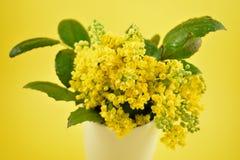 Желтые изображения запаса кустарника весны Стоковые Изображения RF