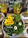 Желтые и белые цветки с белой бабочкой стоковые фото