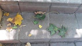 Желтые и зеленые листья на каменных лестницах стоковые фотографии rf
