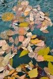 желтые и коричневые листья различной стоковое изображение rf