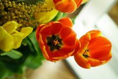 Желтые и красные тюльпаны, мимоза Стоковая Фотография RF
