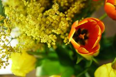 Желтые и красные тюльпаны, мимоза Стоковые Изображения