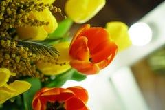 Желтые и красные тюльпаны, мимоза Стоковое Фото