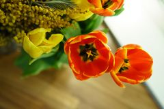 Желтые и красные тюльпаны, мимоза Стоковое Изображение RF