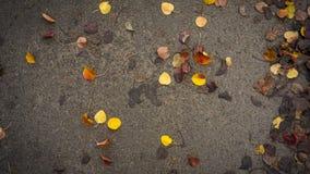 Желтые и оранжевые листья осени на асфальте серая погода стоковое изображение