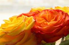 Желтые и оранжевые розы Loseup ¡ Ð, макрос Стоковая Фотография RF