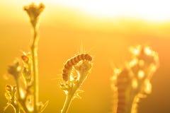 Желтые и черные striped гусеницы киновари подавая во время su Стоковое фото RF