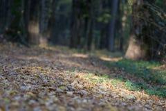 Желтые кленовые листы на земле стоковые изображения rf