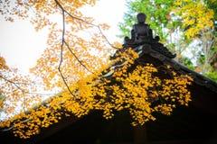 Желтые клен и крыша Стоковые Фотографии RF