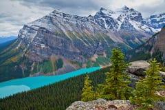 Желтые лиственницы в осени над Lake Louise в национальном парке Banff, Альберте стоковые фотографии rf
