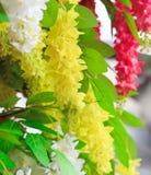 Желтые листья зацветать и зеленого цвета цветка Стоковое Фото