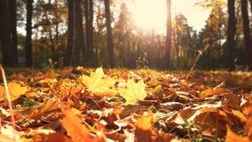 Желтые листья на земле в парке падения акции видеоматериалы
