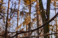 Желтые листья на предпосылке неба стоковое фото rf