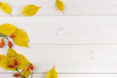 Желтые листья осени и плоды шиповника на белом деревянном столе стоковые изображения rf
