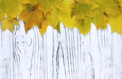 Желтые листья осени над деревянной предпосылкой с космосом экземпляра Стоковые Изображения