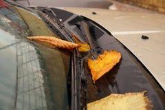 Желтые листья осени на автомобиле Стоковая Фотография