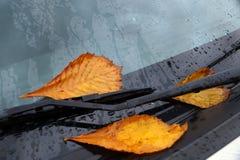Желтые листья осени на автомобиле Стоковое фото RF