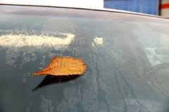 Желтые листья осени на автомобиле Стоковая Фотография RF