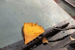 Желтые листья осени на автомобиле Стоковое Фото