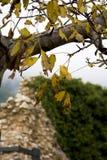 Желтые листья осени на обнаженной ветви дерева стоковые фото
