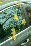 Желтые листья осени на стекле припаркованного автомобиля Стоковая Фотография