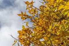 Желтые листья падения осени стоковая фотография rf