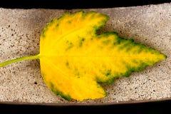 Желтые листья Стоковое Изображение RF