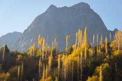 Желтые лист дерева в долине в сезоне осени, Пакистане Gupis Стоковое Фото