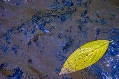 Желтые лист дерева плавая на поток стоковые изображения rf