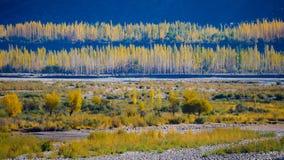 желтые лист осень сезона Стоковые Изображения RF