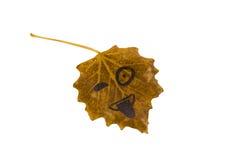 Желтые лист с изображением стороны показывают язык и подмигивают изолят Стоковые Фотографии RF