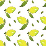 Желтые плоды лимона с зелеными листьями изолированными на белой предпосылке Картина чертежа акварели безшовная для дизайна бесплатная иллюстрация