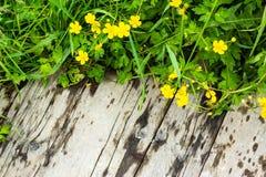 Желтые полевые цветки лета на старой деревянной предпосылке стоковые фотографии rf