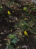 Желтые птицы Стоковая Фотография RF