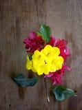 Желтые & розовые цветки стоковое изображение rf