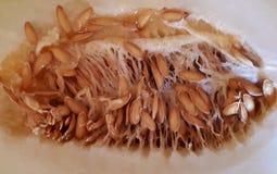 Желтые семена дыни Honeydew в отрезанной дыне Стоковое Изображение RF