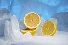 Желтые сочные свежие лимоны замерзают на красивом голубом льде, морозной свежести стоковые фотографии rf