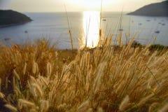 Желтые травы цветут выборочный фокус на тропической предпосылке пляжа стоковые изображения
